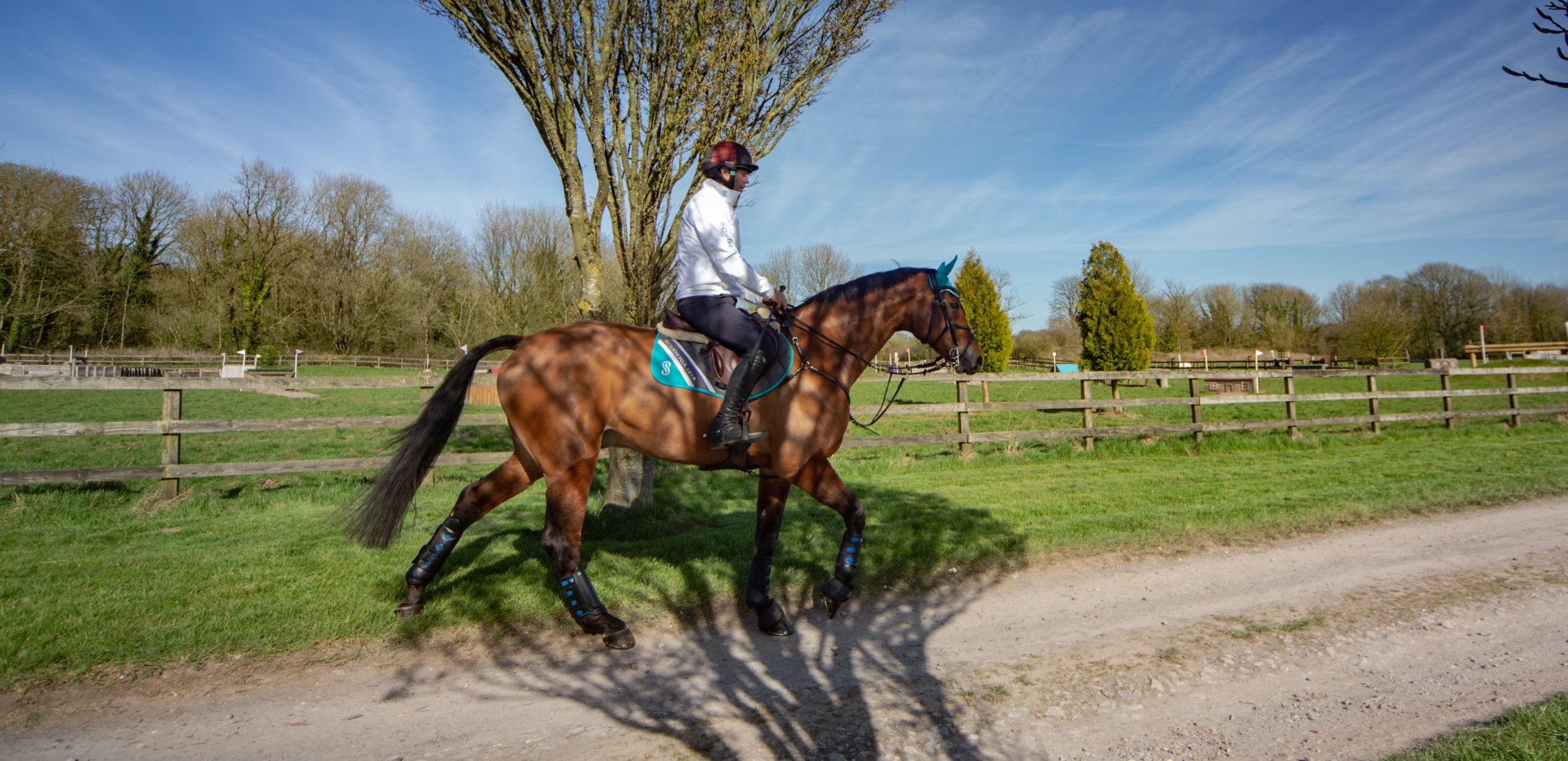 cavalli sportivi